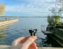 Defunc True Plus Bluetooth Earbuds: A Sleek Black Alternative To AirPods